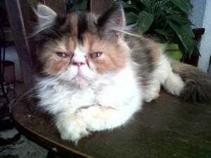 Princesse Haloa img-20120915-003131-300x225